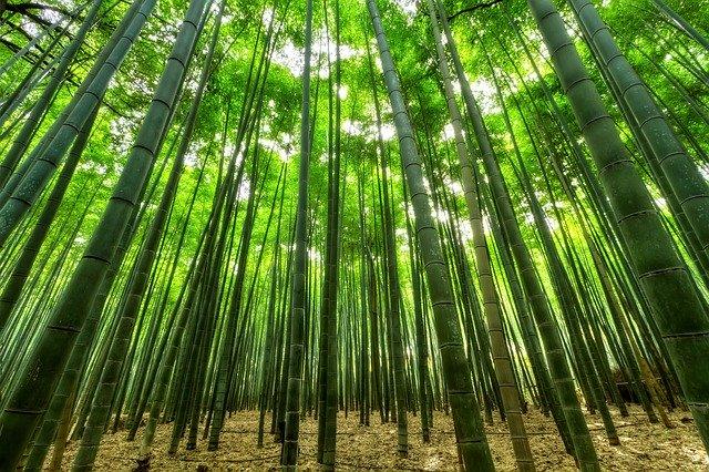 le bambou : une matière durable et écologique